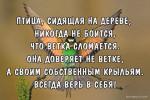 цитаты о счастье, цитаты о жизни и любви, птица