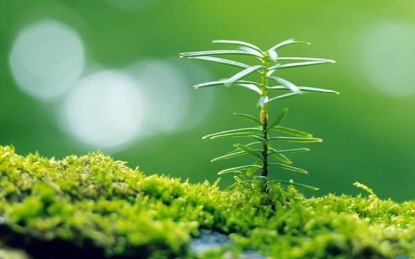 Как начать новую жизнь? Блог о психологии Sumasoyti.com