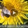 Sumasoyti_psihologiya_kak_poverit_v_sebya